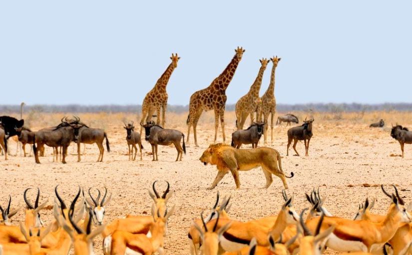 Entre leões, hienas e suricatos: a quem serve uma Áfrikaanimalizada?